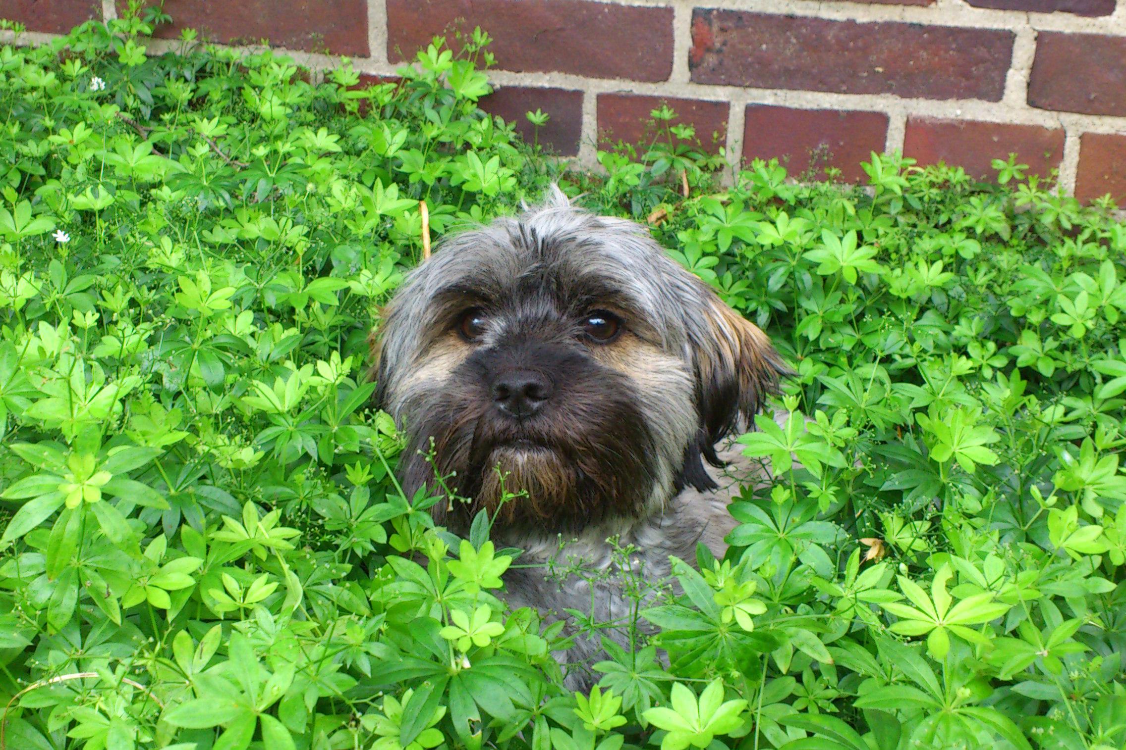 Hund im Waldmeister