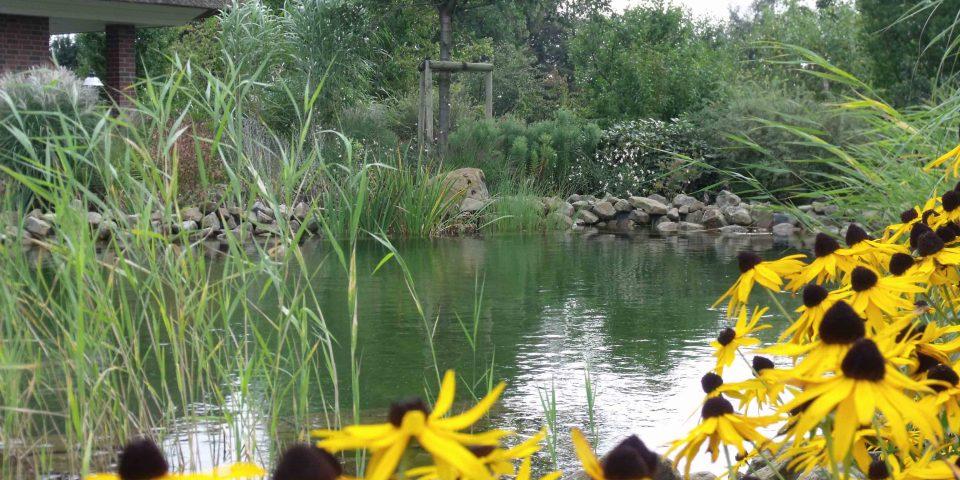 Schwimmteich mit Blumen